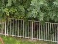 michigan-aluminum-fencing-9